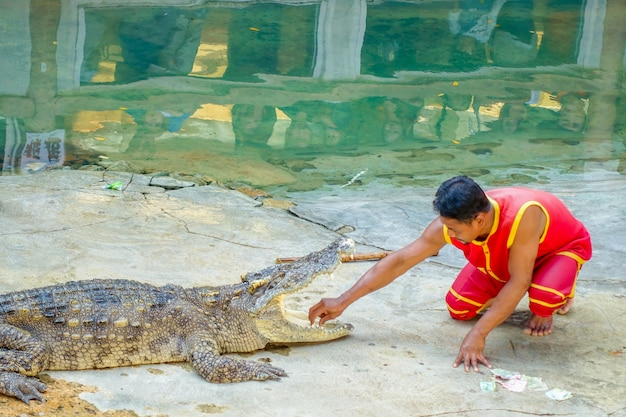 Spectacle de crocodiles à bangkok Photo Premium