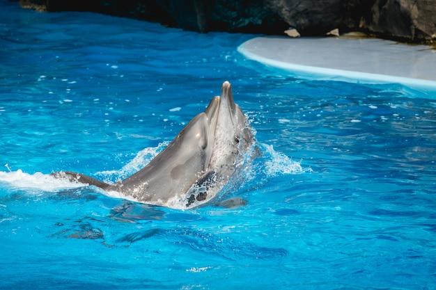 Spectacle de dauphins en thaïlande Photo Premium