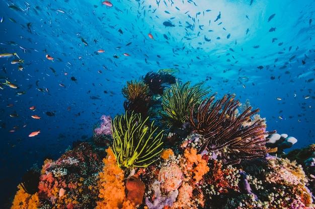 Spectaculaire paysage marin d'un corail tropical et de poissons à la lumière du soleil Photo Premium