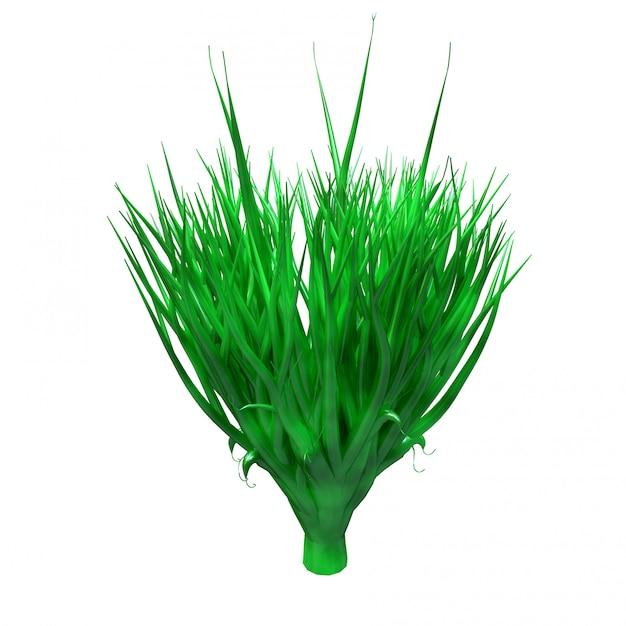 Spiruline Plante, Algues Sous-marines Photo Premium