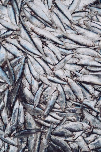 Sprats de poisson au marché aux poissons. poisson bio frais. Photo Premium