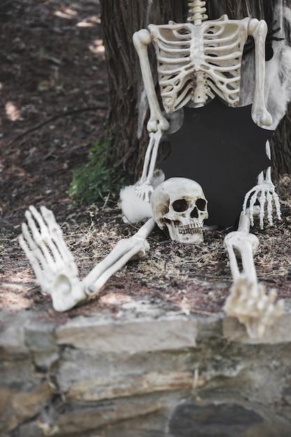 Squelette assis avec crâne et tablette sous forme de tache près de l'arbre Photo gratuit