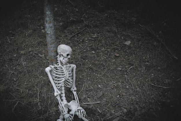 Squelette effrayant penche sur l'arbre dans les bois Photo gratuit