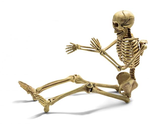 Squelette humain isolé Photo Premium