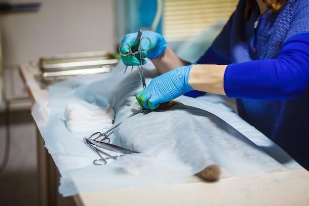 Stérilisation Du Chat Sur Des Tables Chirurgicales Sous Anesthésie Générale Photo Premium