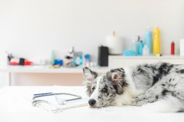 Stéthoscope sur presse-papiers avec chien allongé sur une table d'opération dans la clinique Photo gratuit