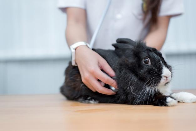 Un stéthoscope à usage vétérinaire pour diagnostiquer un lapin mignon Photo Premium