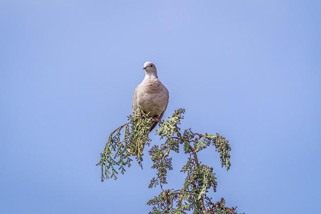 Stock Colombe Assis Sur La Branche D'arbre Sous Un Ciel Bleu Photo gratuit