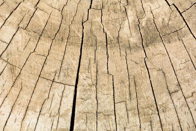 Structure en bois, abstrait espace de copie. sécher le vieil arbre avec des fissures. coupe en bois montrant des anneaux de croissance. Photo Premium