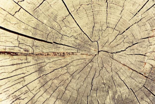 Structure en bois, abstrait sécher le vieil arbre avec des fissures. coupe en bois montrant des anneaux de croissance. Photo Premium