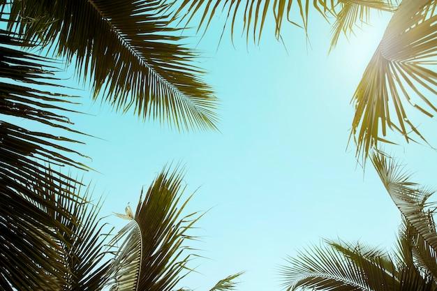 Style rétro cocotier avec ciel bleu, palmiers sur fond tropical, concept de vacances voyage été et vacances Photo Premium
