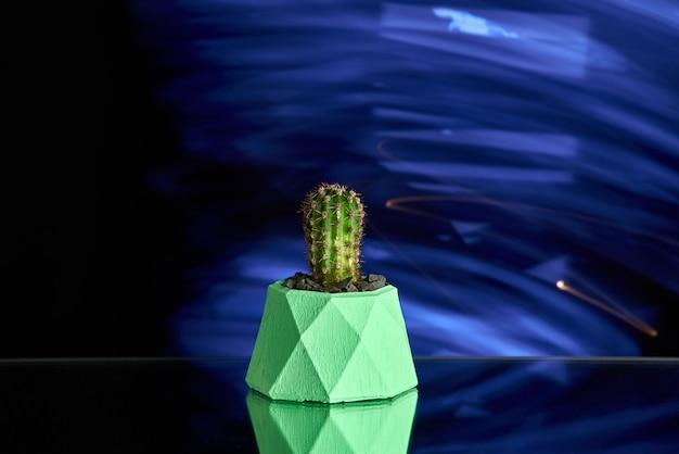 Succulentes, cactus dans un pot en béton vert sur fond bleu clair. photo propre Photo Premium