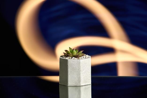 Succulentes dans un pot en béton sur fond bleu clair. photo propre Photo Premium