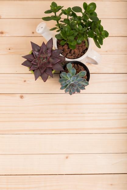 Succulentes, plantes d'intérieur en pots Photo Premium