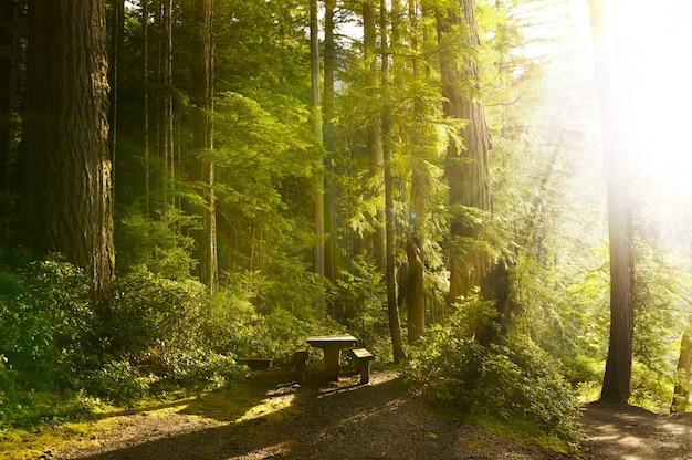 Sunny rainforest Photo gratuit