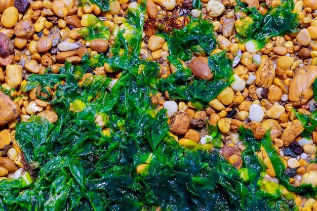 Surface Abstraite Avec Des Cailloux Et Des Algues Photo Premium