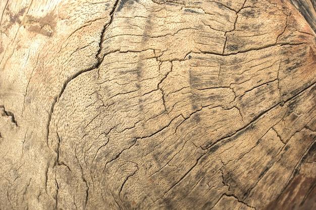 Surface texturée du vieil arbre. Photo Premium