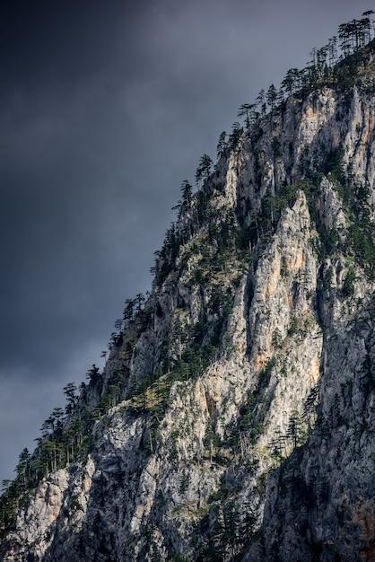 Surplombant les falaises avec un arbre. détail de haute montagne paysage. Photo Premium