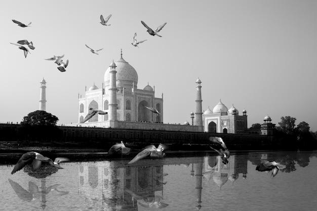 Le taj mahal se reflète dans la vue du fleuve yamuna avec un oiseau survolant. Photo Premium