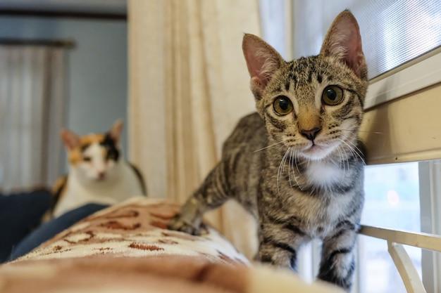 Tant le chat est sur le canapé à côté de la fenêtre. le gros chat regardait le petit chat. Photo Premium