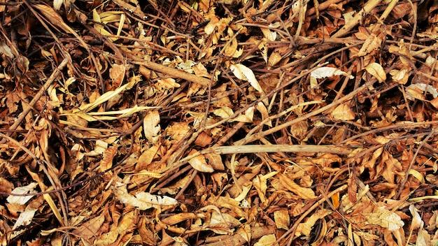 Tas de feuilles sèches brunes Photo Premium