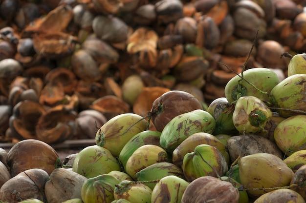 Tas De Noix De Coco Mûres De La Récolte De La Plantation De Noix De Coco En Thaïlande. Matière Première Pour L'industrie De La Fabrication De L'huile De Coco Vierge Et Du Lait De Coco. Photo Premium