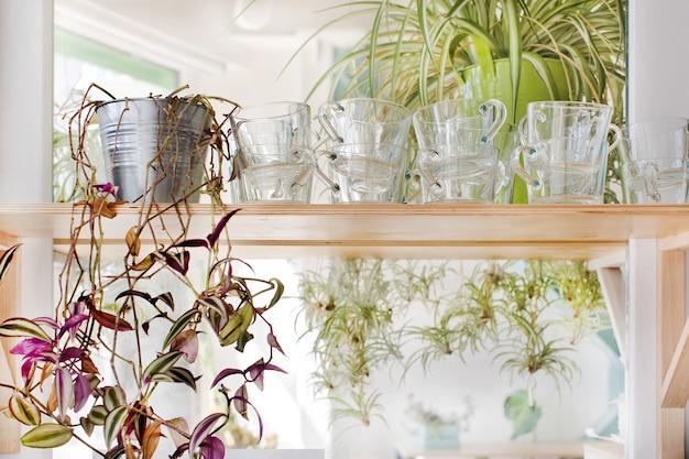 Tasses Et Plantes D'intérieur Debout Sur Une étagère Photo Premium