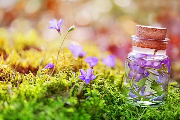 Teinture d'herbes et de fleurs de la forêt dans une bouteille en verre de mousse et de fleurs Photo Premium