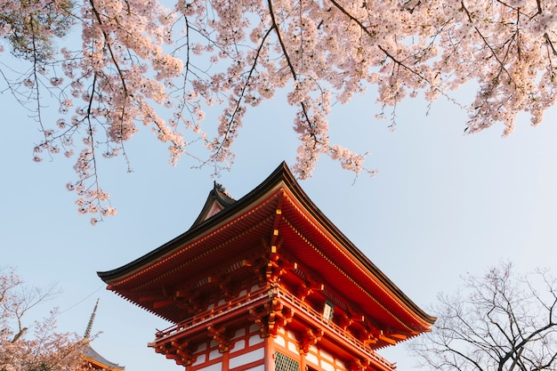 Temple kiyomizu-dera et sakura au japon Photo gratuit