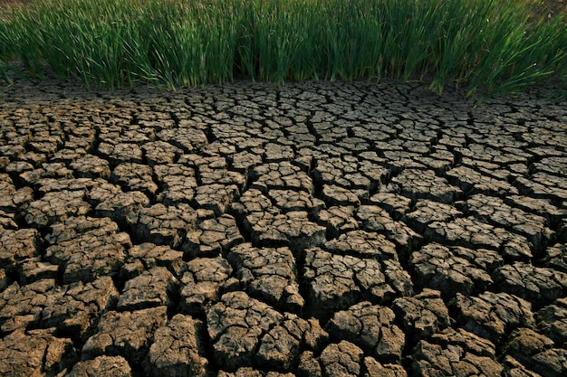 Terrain avec sol sec et fissuré Photo Premium