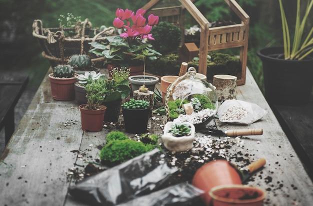 Terrarium plantes de jardin sur la table Photo gratuit