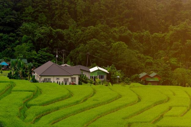 Terrasses de rizières à mae klang luang, chez l'habitant à chiang mai, thaïlande Photo Premium
