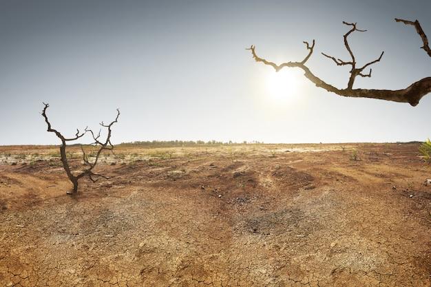 Terre fissurée avec de l'herbe dan arbre sec Photo Premium