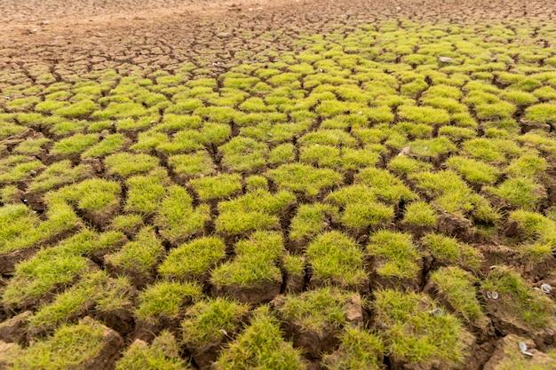 La terre avec le sol sec et le réchauffement climatique couvert d'herbe Photo Premium