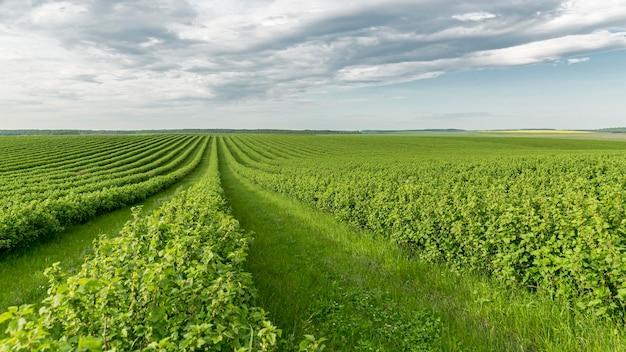 Terres Agricoles à Angle élevé à La Campagne Photo gratuit