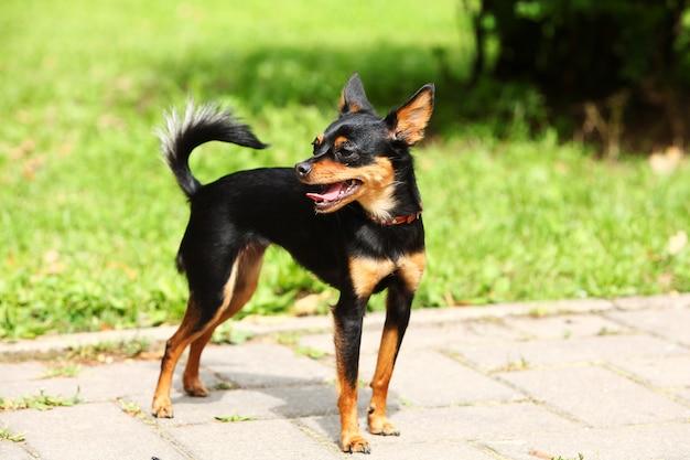 Terrier Jouet Mignon Dans Le Parc Photo gratuit
