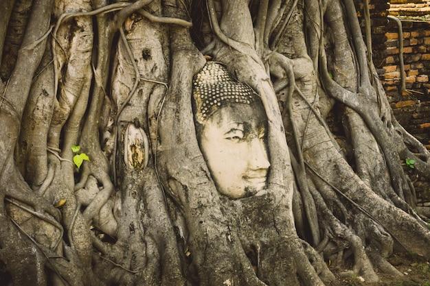 Tête de bouddha en pierre entourée de racines d'arbres dans le temple wat prha mahathat à ayutthaya, thaïlande Photo Premium