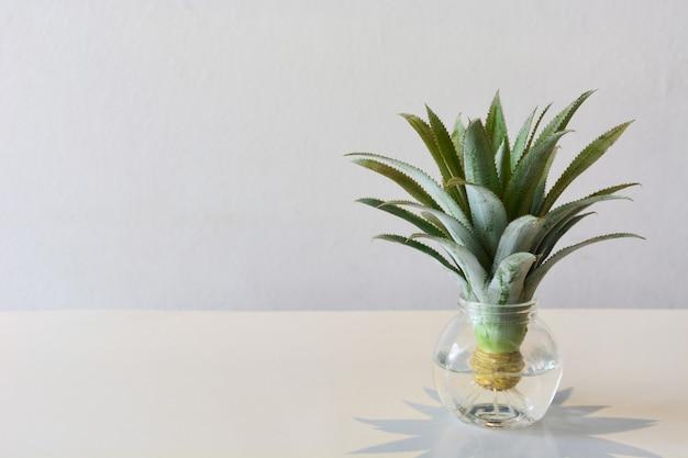 Tête de mini ananas ou nain (broméliacées) dans un vase transparent sur la table Photo Premium