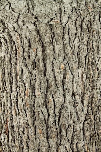 Texture d'arbre en bois Photo Premium