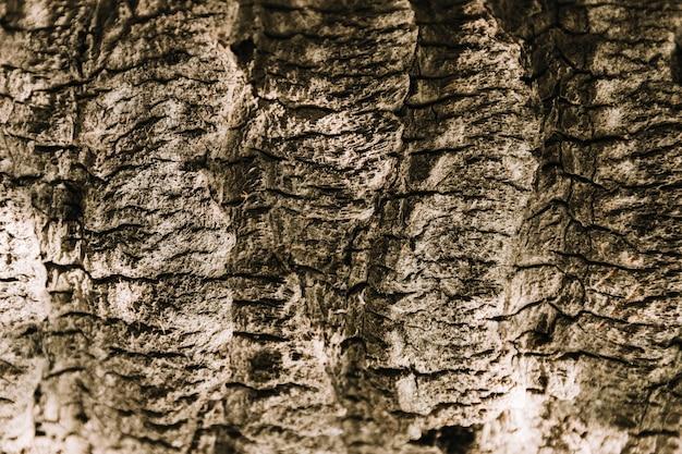 Texture d'arbre Photo gratuit