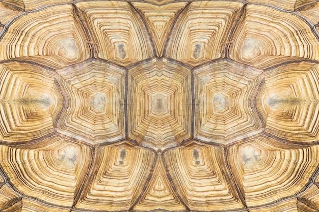 Texture d'arrière-plan de la tortue Photo Premium