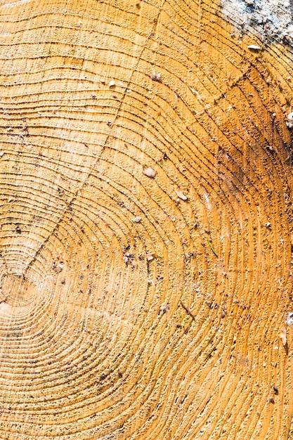 Texture bois avec des anneaux d'arbre Photo Premium