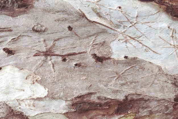 Texture bois détaillée du fond de l'arbre Photo gratuit