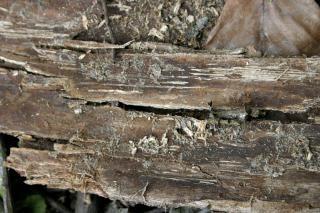 Texture De Bois, La Texture, De Craquage   Photo Gratuite