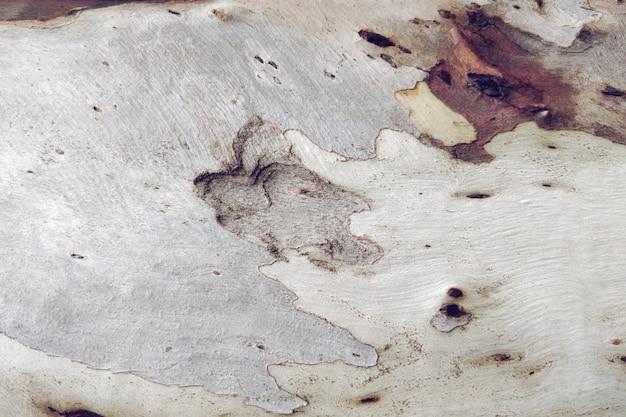 Texture en bois de vieil arbre Photo gratuit