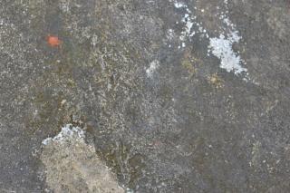 Texture brute du mur rugueux Photo gratuit