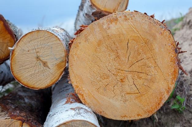 Texture coupée arbre coupé Photo Premium