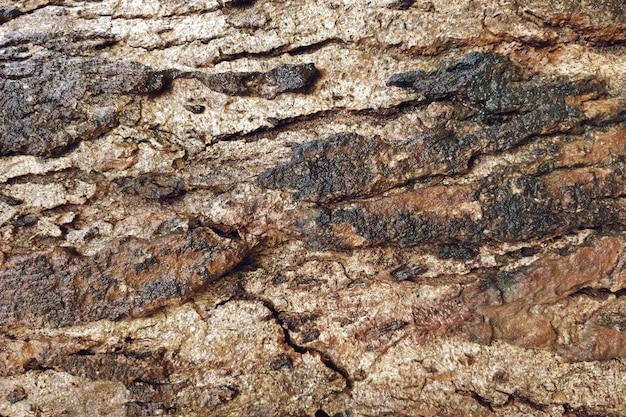 Texture du bois ancien avec fond de fissures Photo gratuit