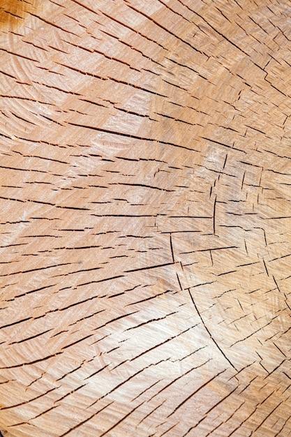 Texture du tronc d'arbre coupé Photo Premium