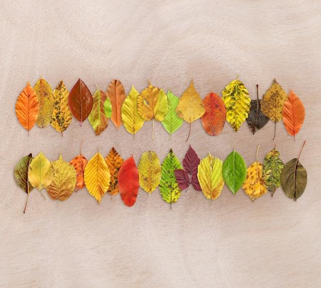 Texture de la feuille d'automne sur bois Photo Premium